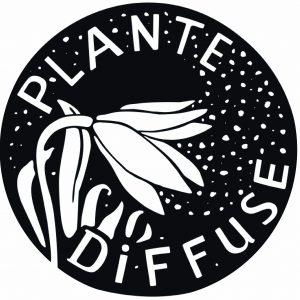 LA PLANTE DIFFUSE